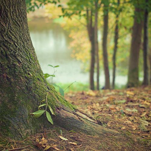 http://alldatmatterz.com/img/article/1123/tree.jpg
