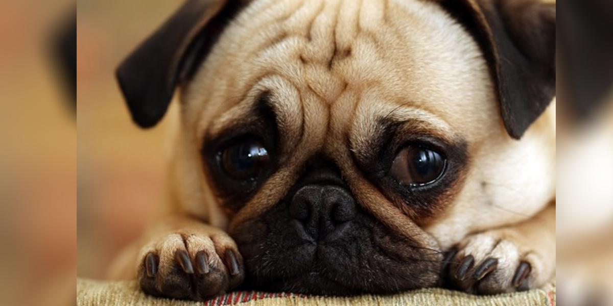 http://alldatmatterz.com/img/article/1215/sad dog.jpg
