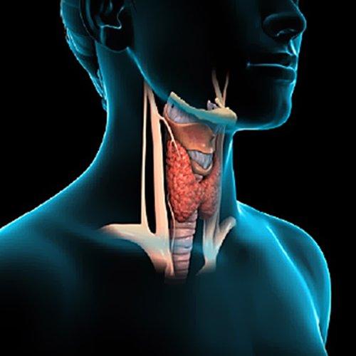 http://alldatmatterz.com/img/article/1492/thyroid.jpg