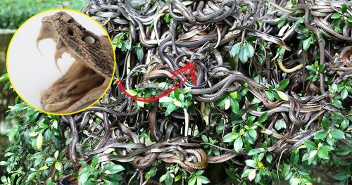 Creepy Snake Island Of  Brazil Off Limits To Humans