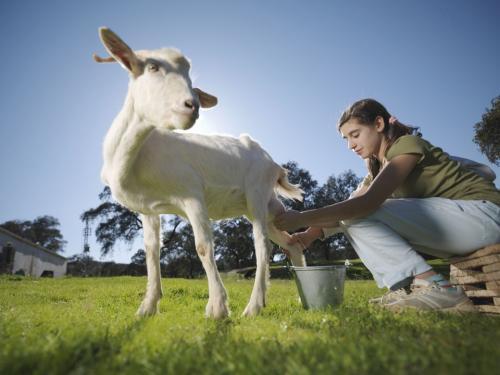 9 surprising goat milk health benefits